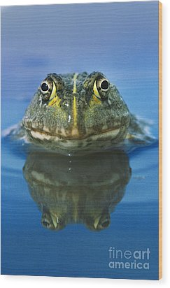 African Bullfrog Wood Print by Frans Lanting MINT Images