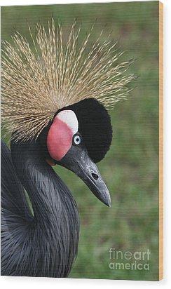 African Crowned Crane #2 Wood Print