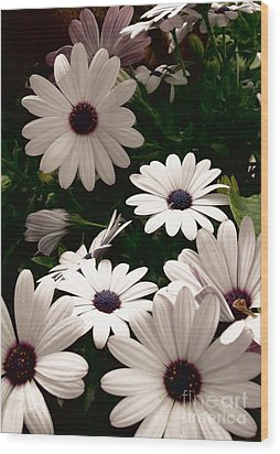 Wood Print featuring the photograph African Daisies by Debi Dmytryshyn