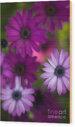 African Daisy Collage Wood Print by Mike Reid