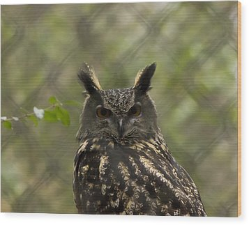 African Eagle Owl Wood Print