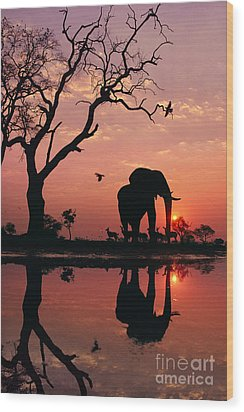 African Elephant At Dawn Wood Print by Frans Lanting MINT Images