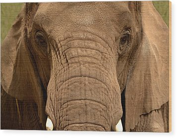 Wood Print featuring the photograph African Elephant by Nadalyn Larsen