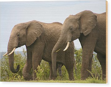 African Elephants Wood Print by Menachem Ganon