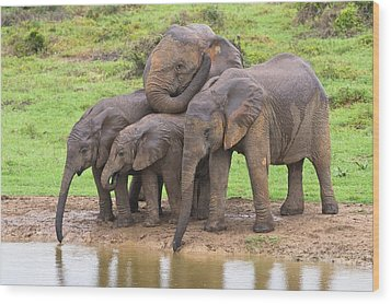 African Elephants Wood Print by Science Photo Library