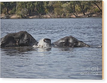 Wood Print featuring the photograph African Elephants Swimming In The Chobe River Botswana by Liz Leyden