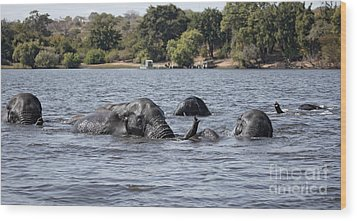 Wood Print featuring the photograph African Elephants Swimming In The Chobe River by Liz Leyden