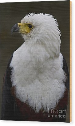 African Fish Eagle 4 Wood Print by Heiko Koehrer-Wagner