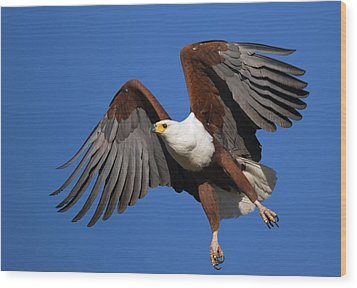 African Fish Eagle Wood Print by Johan Swanepoel