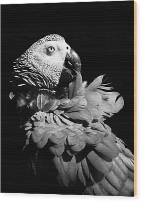 African Grey  Wood Print by Paulina Szajek