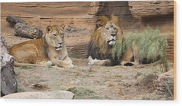 African Lion Couple 2 Wood Print