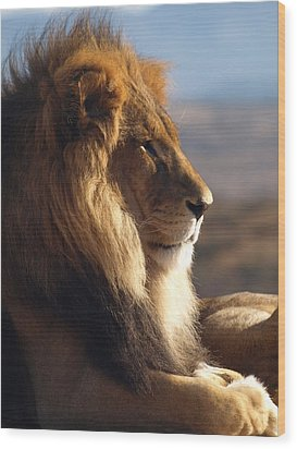 African Lion Wood Print by James Peterson