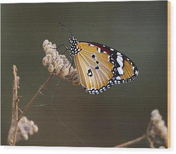 African Monarch Wood Print by Meir Ezrachi