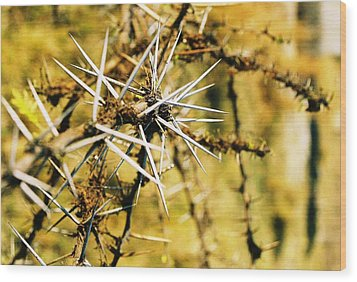 Wood Print featuring the photograph African Thorns by Carlee Ojeda