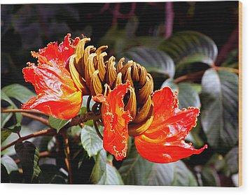 African Tulips Wood Print by Karon Melillo DeVega