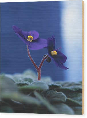 Wood Print featuring the photograph African Violet by Lana Enderle