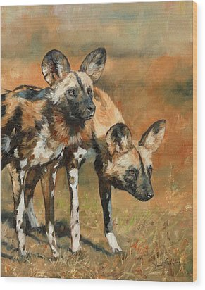 African Wild Dogs Wood Print by David Stribbling