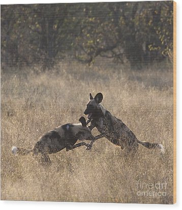 Wood Print featuring the photograph African Wild Dogs Play-fighting by Liz Leyden