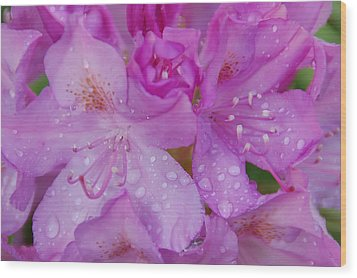 Wood Print featuring the photograph After The Rain by Aimee L Maher Photography and Art Visit ALMGallerydotcom