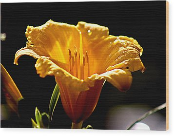 After The Rain Flower 1 Wood Print by Mark Russell