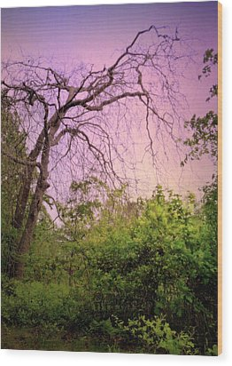 Wood Print featuring the photograph After The Rain by Jim Whalen