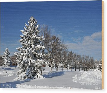 After The Snow 2 Wood Print by Graham Taylor