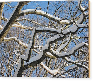After The Snowfall 2 Wood Print