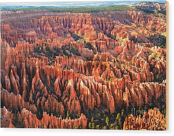 Afternoon Hoodoos Wood Print by Robert Bales