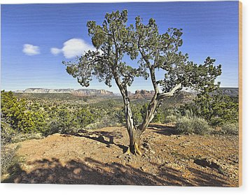 Afternoon Light In Sedona Arizona Wood Print by James Steele