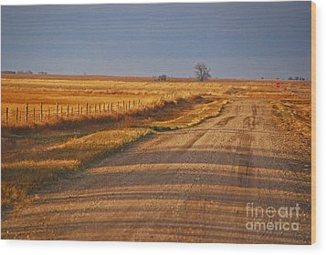 Afternoon Shadows Wood Print by Mary Carol Story