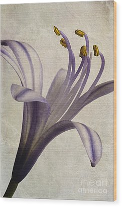 Agapanthus Africanus Star Wood Print by John Edwards