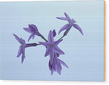 Agapanthus Blossoms Wood Print