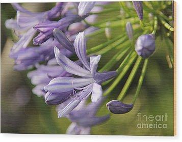 Agapanthus Flower Close-up Wood Print
