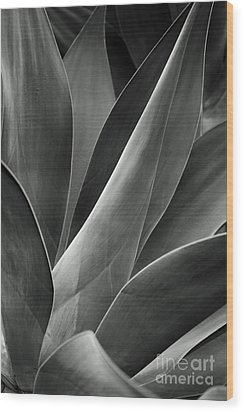 Agave In Black And White Wood Print by Charmian Vistaunet