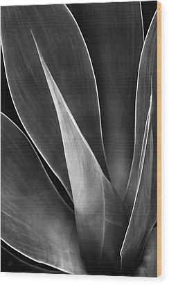 Agave No 3 Wood Print by Ben and Raisa Gertsberg