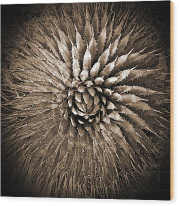 Agave Spikes Sepia Wood Print by Alan Socolik