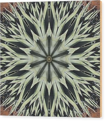 Agave Star Wood Print by Trina Stephenson