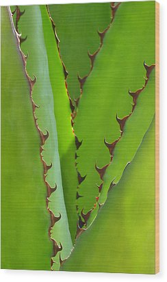 Agave Teeth Wood Print by Cindy McDaniel