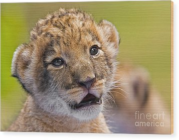 Age Of Innocence Wood Print by Ashley Vincent