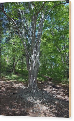Aging Gracefully Wood Print by Kelvin Booker