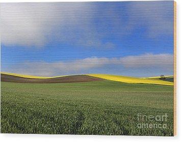 Agricultural Landscape. Auvergne. France. Wood Print by Bernard Jaubert