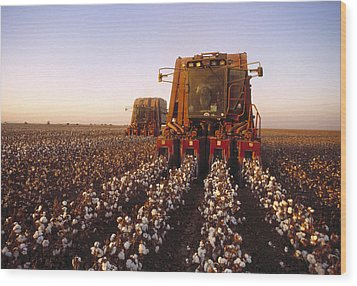 Agriculture - Cotton Harvesting  San Wood Print by Ed Young
