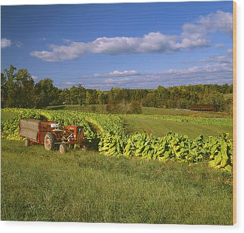 Agriculture - Fields Of Maturing Flue Wood Print by R. Hamilton Smith