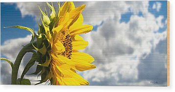 Ah Sunflower Wood Print by Bob Orsillo