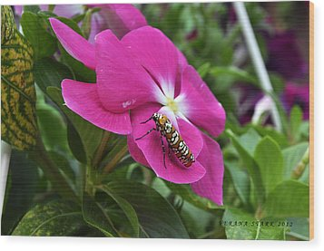Wood Print featuring the photograph Ailanthus Webworm Moth Visiting My Garden by Verana Stark
