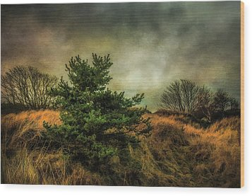Wood Print featuring the photograph Ainsdale Dunes In Winter by Brian Tarr