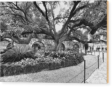 Wood Print featuring the photograph Alamo Grounds by Ricardo J Ruiz de Porras
