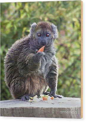 Alaotran Gentle Lemur Wood Print by Terri Waters