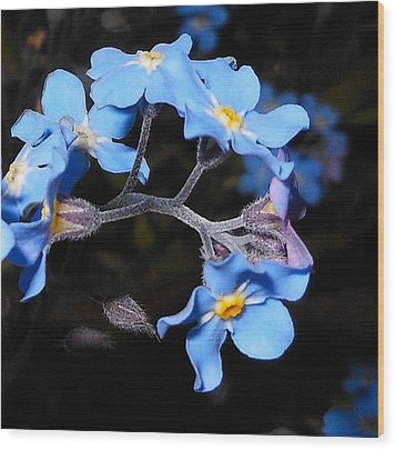 Alaska Forget Me Not Wood Print