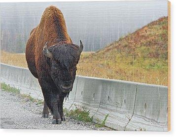 Alaska Hwy Bison Wood Print